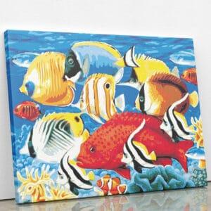 Akwarium dyskowców - mozaika
